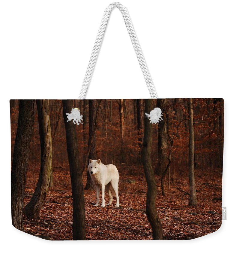Wolf Weekender Tote Bag featuring the photograph Loner by Lori Tambakis