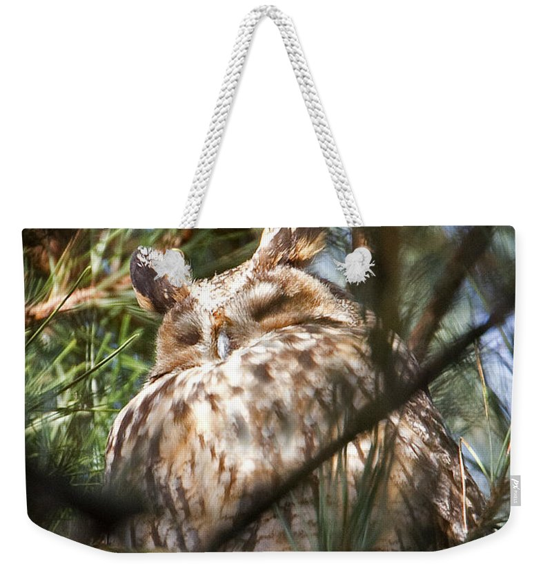 Long-eared Owl Weekender Tote Bag featuring the photograph Long-eared Owl by Bob Kemp