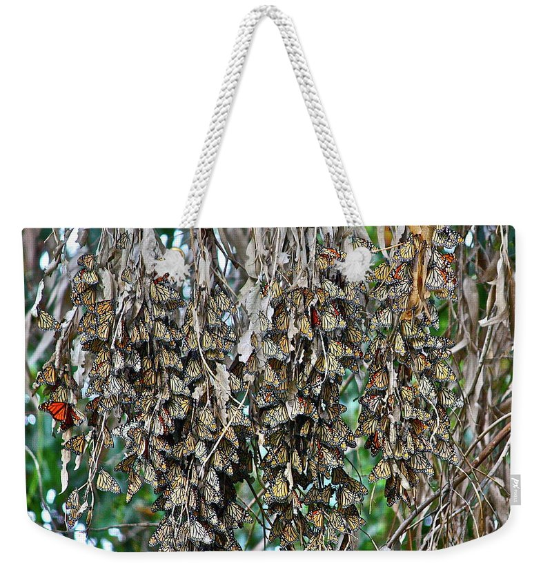 Butterfly Weekender Tote Bag featuring the photograph Look Closely by Diana Hatcher