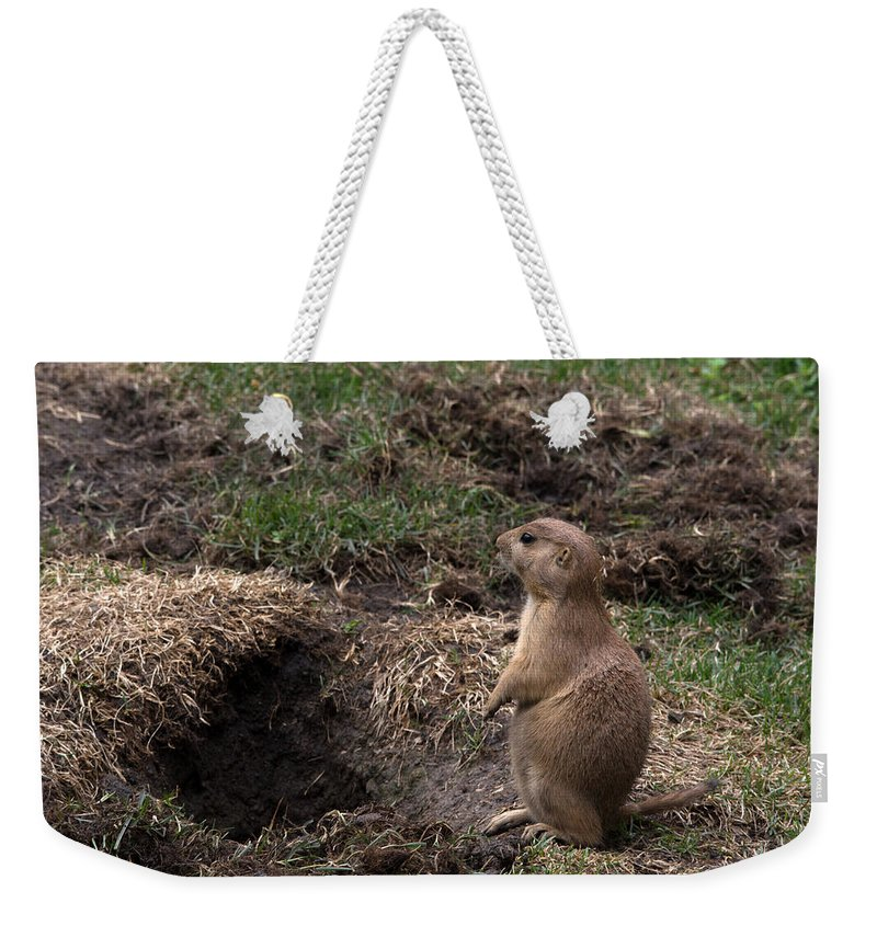 Wildlife Weekender Tote Bag featuring the photograph Look Over There by Linda Kerkau
