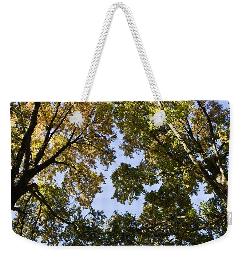 Fall Weekender Tote Bag featuring the photograph Look Up by Teresa Mucha