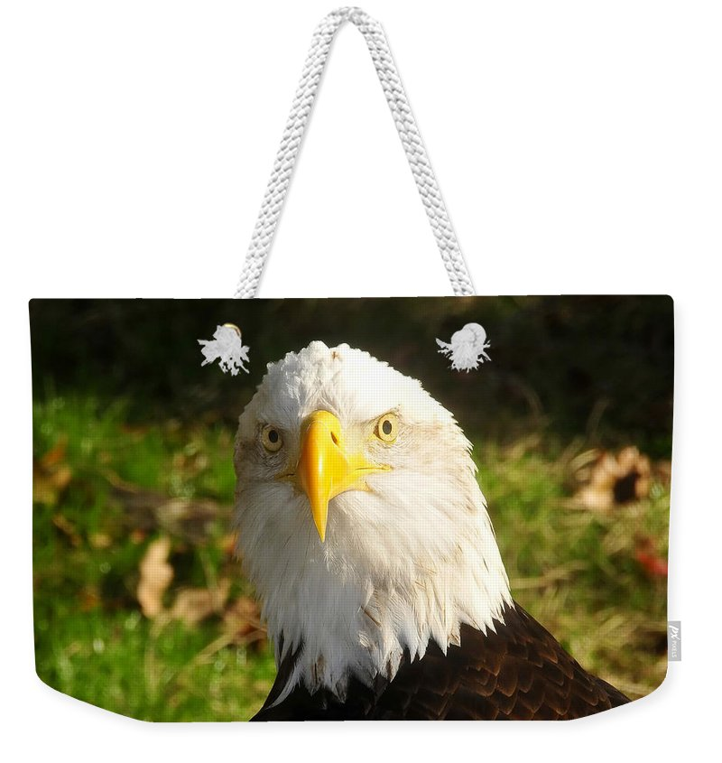 American Bald Eagle Weekender Tote Bag featuring the photograph Looking Eagle by David Lee Thompson