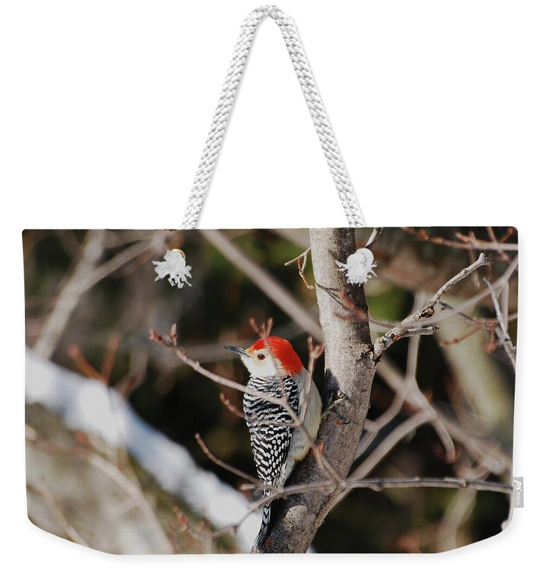Woodpecker Weekender Tote Bag featuring the photograph Looking For A Place To Peck by Lori Tambakis