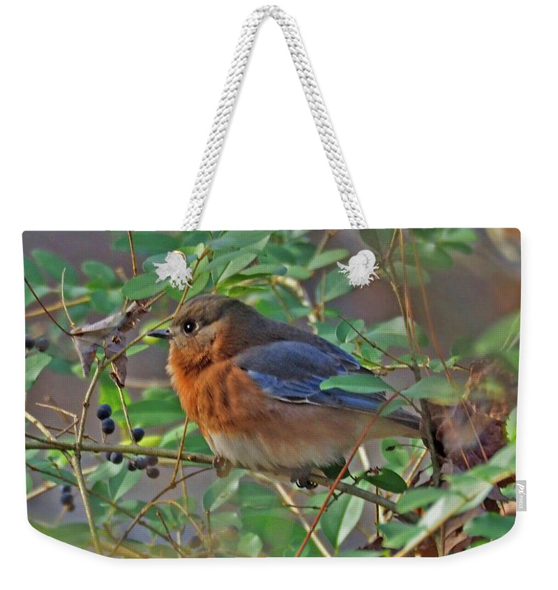 Bluebird Weekender Tote Bag featuring the photograph Looking For Berries by Dorothy Pugh