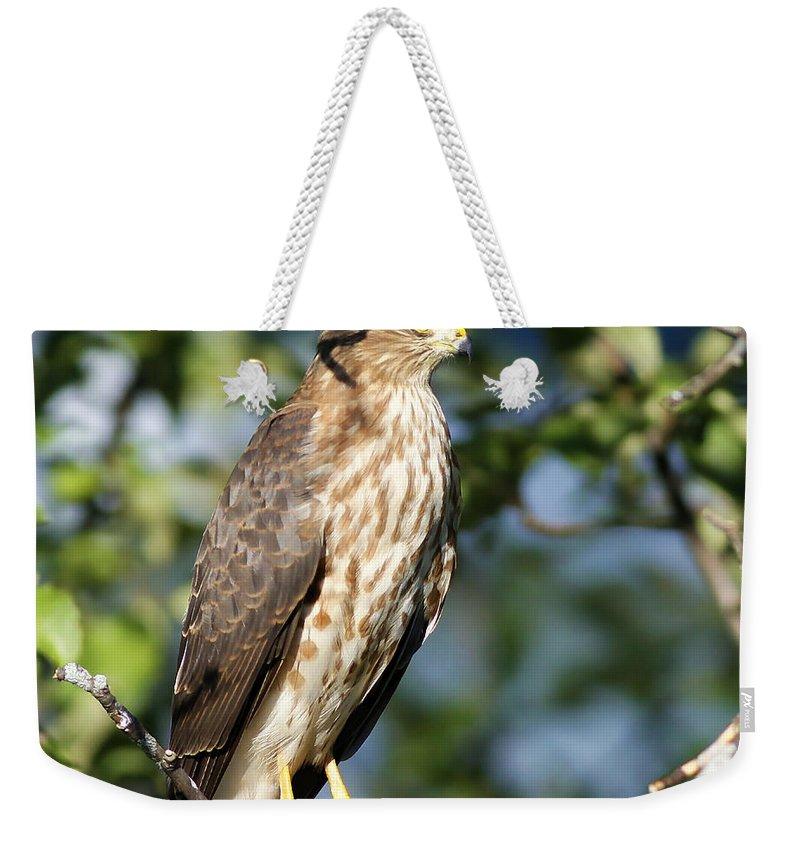 Hawk Weekender Tote Bag featuring the photograph Looking For Supper by Deborah Benoit
