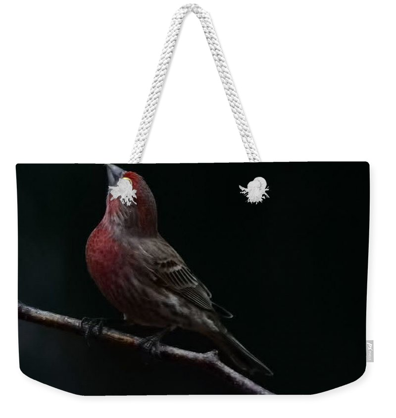 Finch Weekender Tote Bag featuring the photograph Looking Towards Heaven by Gaby Swanson