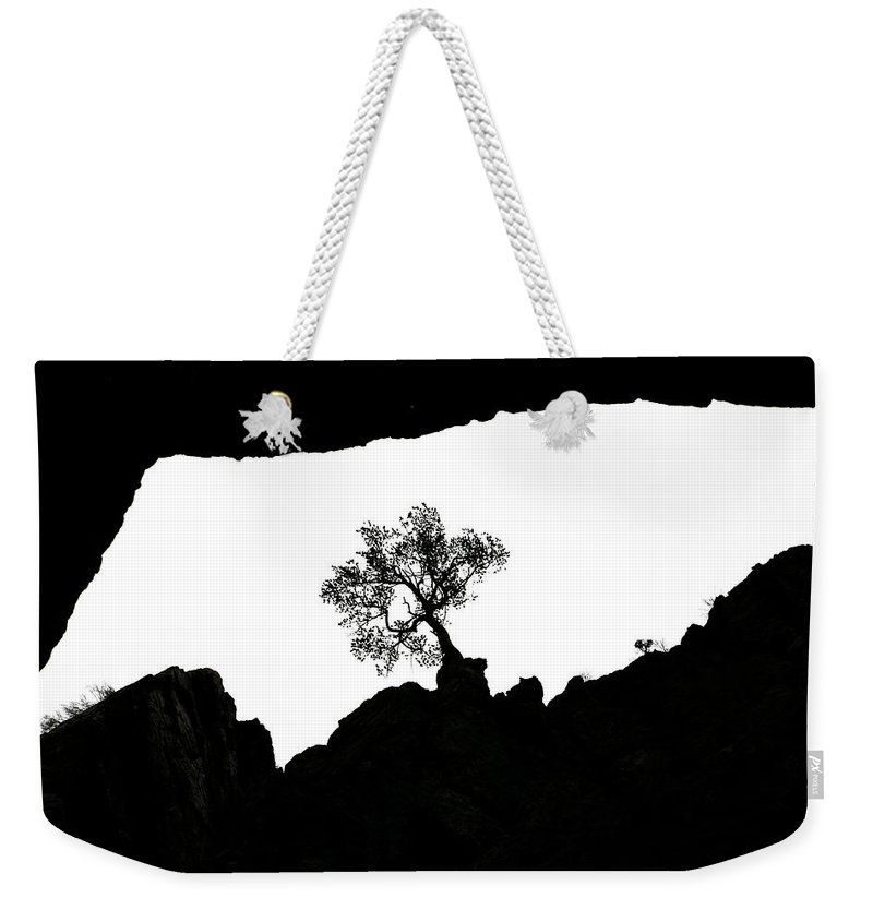 Tree Weekender Tote Bag featuring the photograph Looking Up 2 by Marilyn Hunt