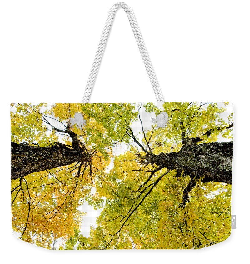 Fall Weekender Tote Bag featuring the photograph Looking Up At Fall by Greg Fortier
