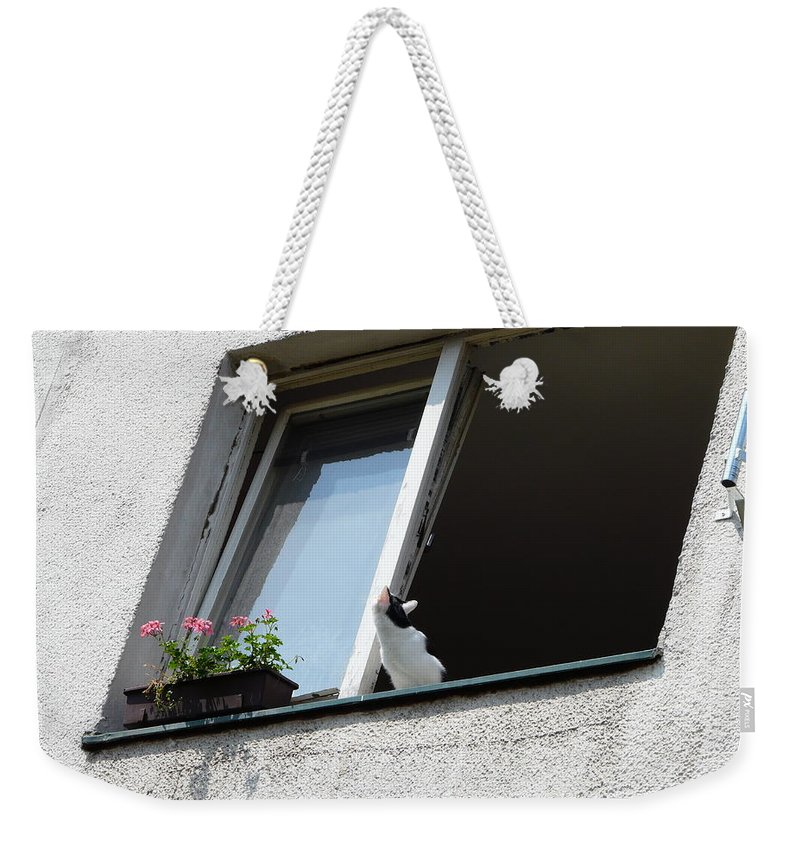 Cat Weekender Tote Bag featuring the photograph Looking Up by Valerie Ornstein
