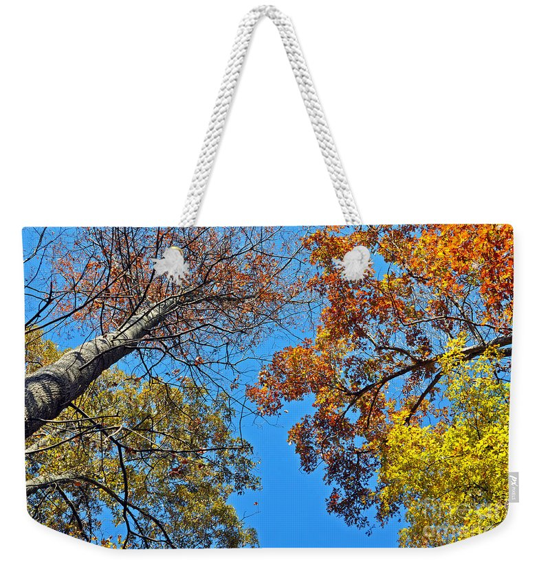 Autumn Weekender Tote Bag featuring the photograph Looking Upward At Autumn's Trees by Lydia Holly