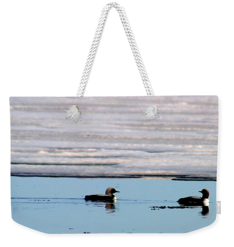 Loons Weekender Tote Bag featuring the photograph Loon On The Arctic by Anthony Jones