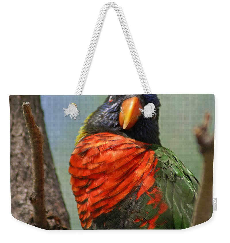 Bird Weekender Tote Bag featuring the photograph Lorikeet by Heather Coen
