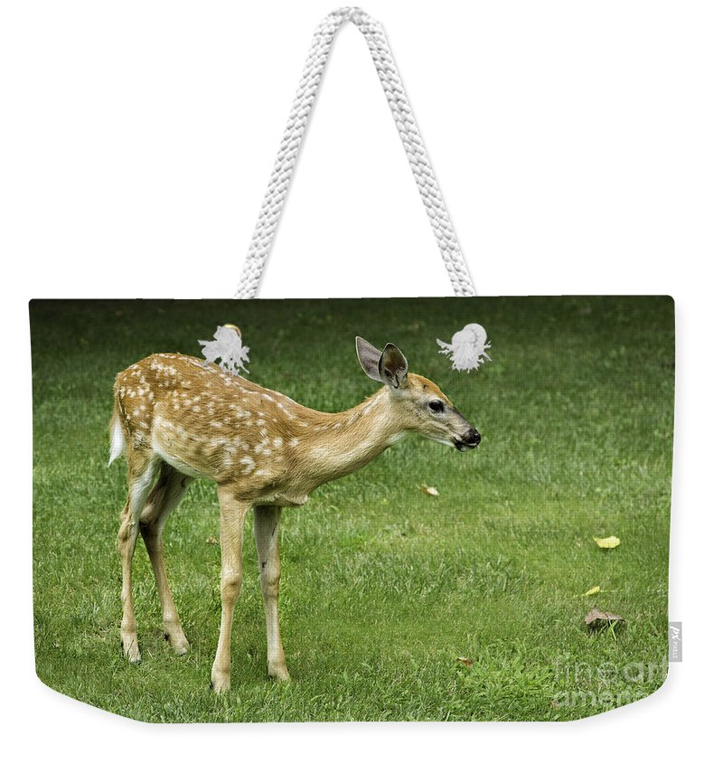 Animals Weekender Tote Bag featuring the photograph Lost Fawn by Timothy Hacker
