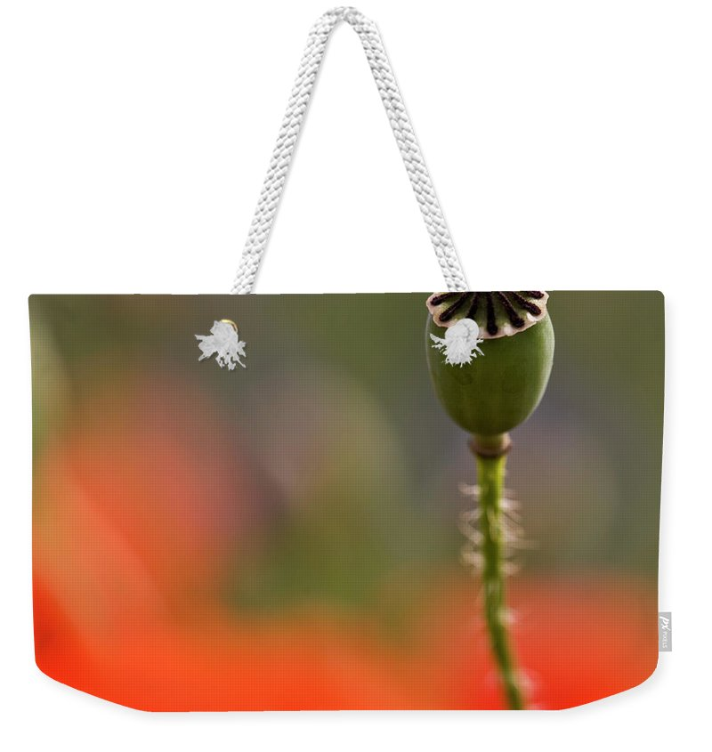 Poppy Weekender Tote Bag featuring the photograph Lost In The Field by Heiko Koehrer-Wagner