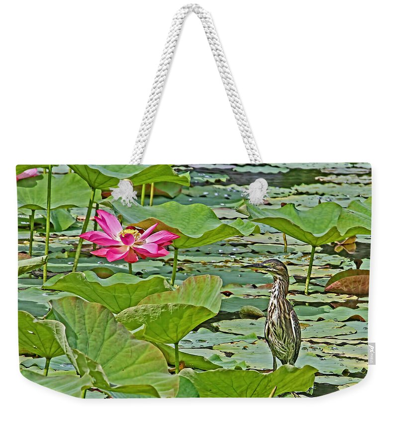 Green Heron Weekender Tote Bag featuring the photograph Lotus Blossom And Heron by HH Photography of Florida