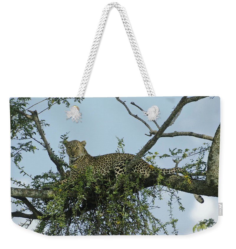Africa Weekender Tote Bag featuring the photograph Lounging Leopard by Michele Burgess
