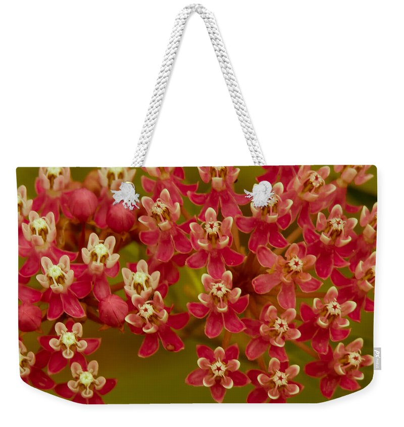Asclepias Incarnata Weekender Tote Bag featuring the photograph Love Me Today by Kristin Hunt