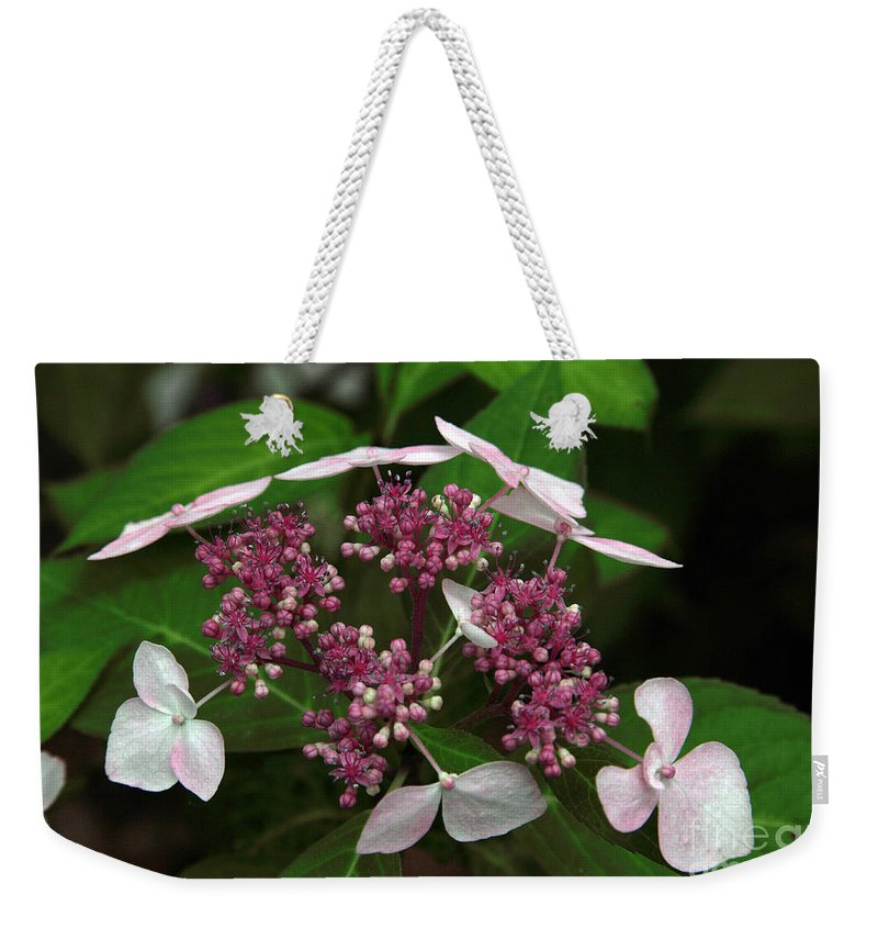 Hydrangea Weekender Tote Bag featuring the photograph Lovely by Amanda Barcon