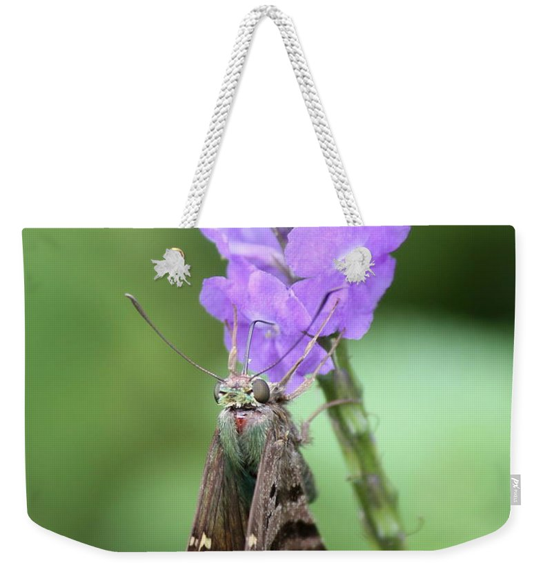 Nature Weekender Tote Bag featuring the photograph Lovely Moth On Dainty Flower by Carol Groenen