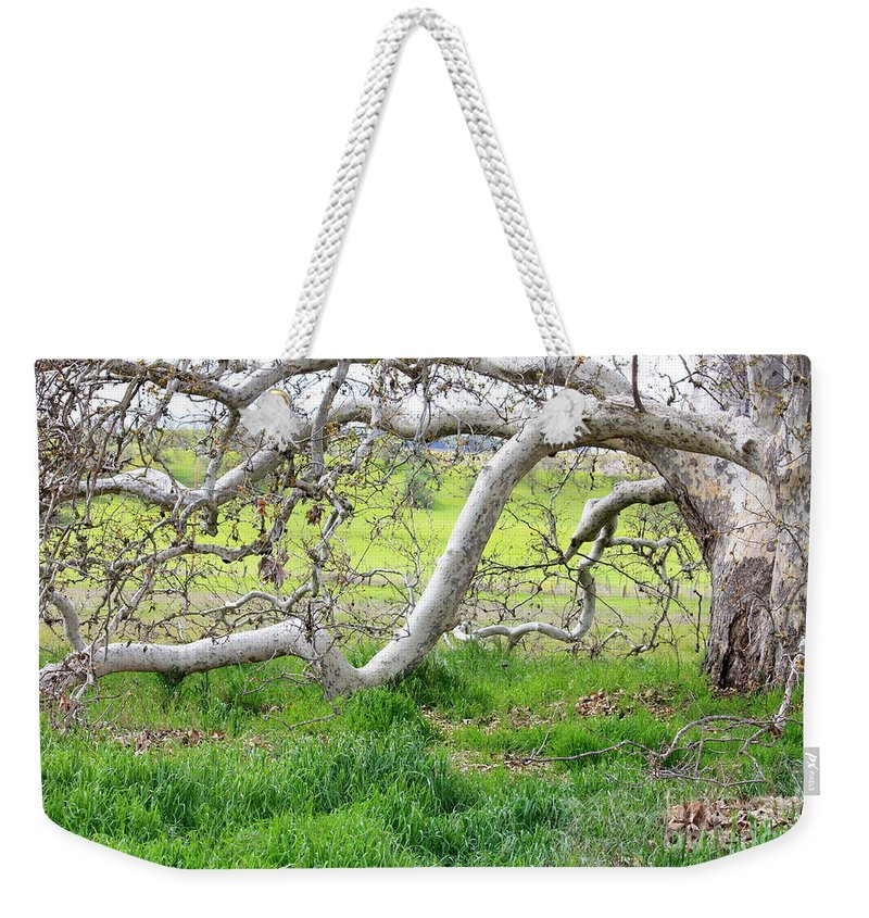 Landscape Weekender Tote Bag featuring the photograph Low Branches On Sycamore Tree by Carol Groenen