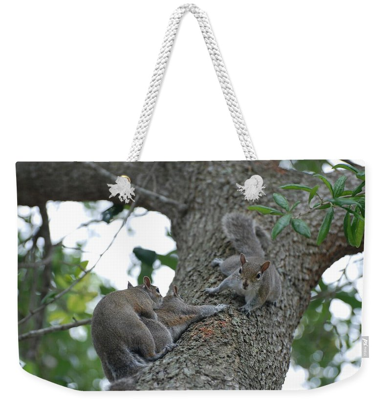 Squirrel Weekender Tote Bag featuring the photograph Luck Be A Lady by Rob Hans