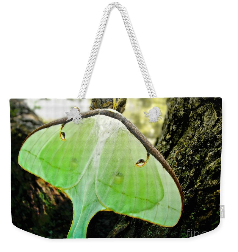 Macro Weekender Tote Bag featuring the photograph Luna Moth No. 3 by Todd Blanchard