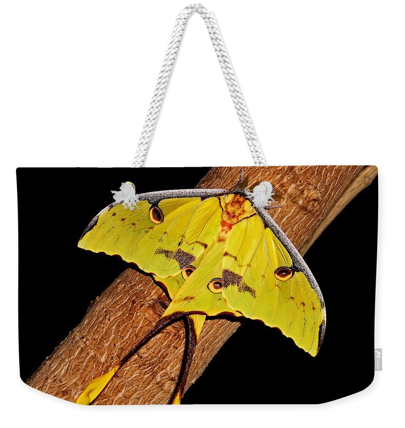 Luna Moth Weekender Tote Bag featuring the photograph Luna Moth by Judy Vincent