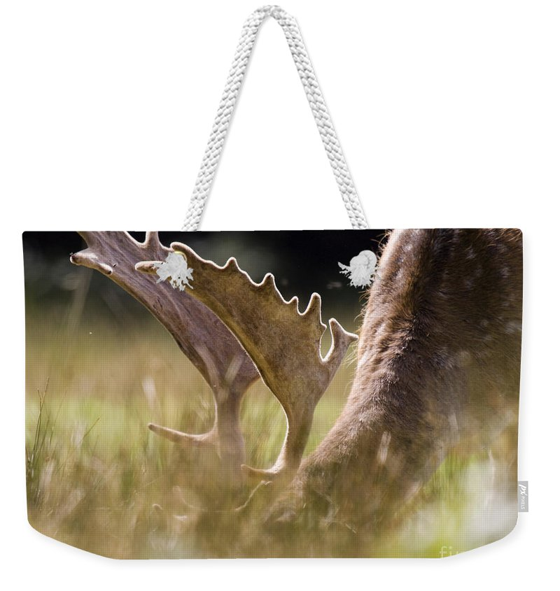 Fallow Deer Weekender Tote Bag featuring the photograph Lunch Time by Angel Tarantella