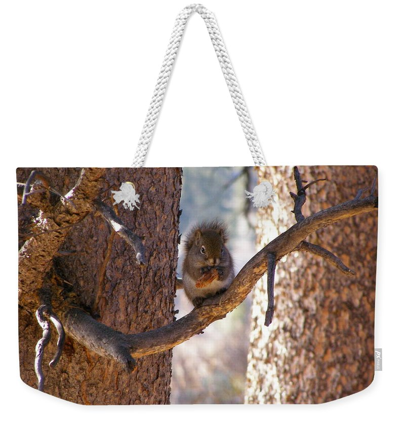 Animals Weekender Tote Bag featuring the photograph Lunch Time by DeeLon Merritt