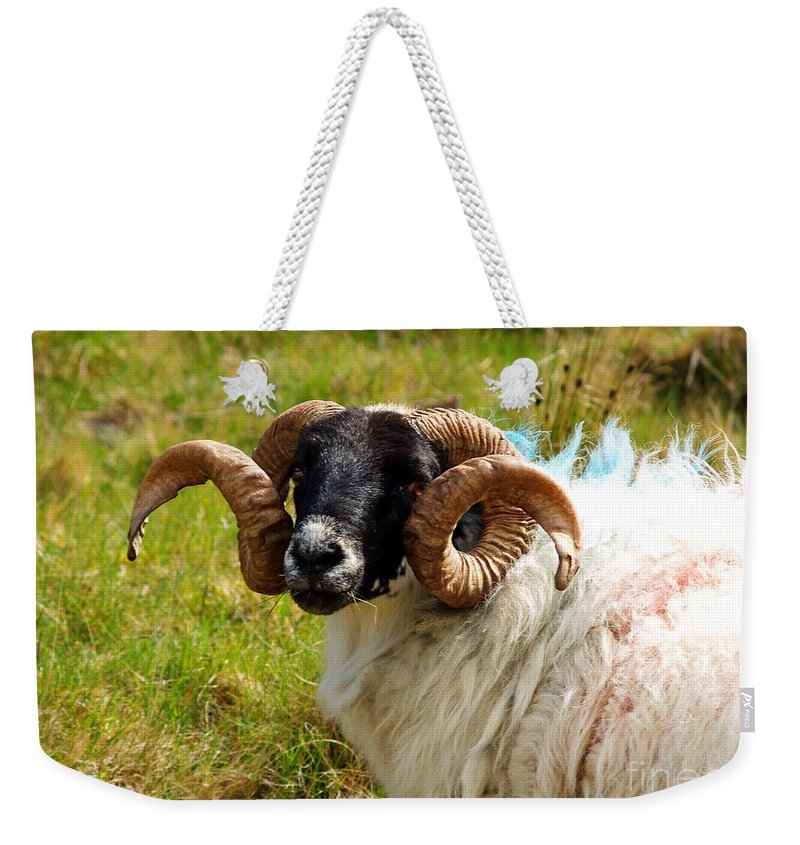 Fine Art Photography Weekender Tote Bag featuring the photograph Lunchtime by Patricia Griffin Brett
