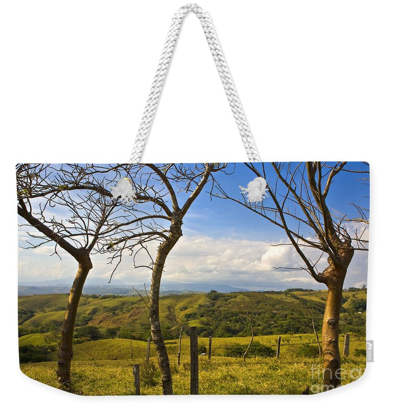 Tree Weekender Tote Bag featuring the photograph Lush Land Leafless Trees I by Madeline Ellis