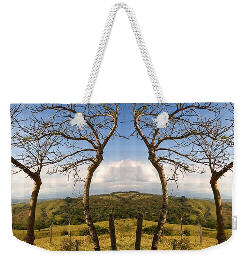 Trees Weekender Tote Bag featuring the photograph Lush Land Leafless Trees IIi by Madeline Ellis