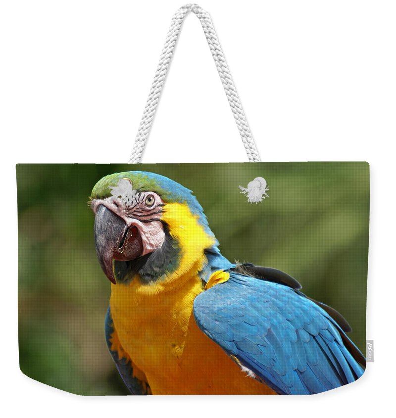 Parrot Weekender Tote Bag featuring the photograph Macaw by Heather Coen