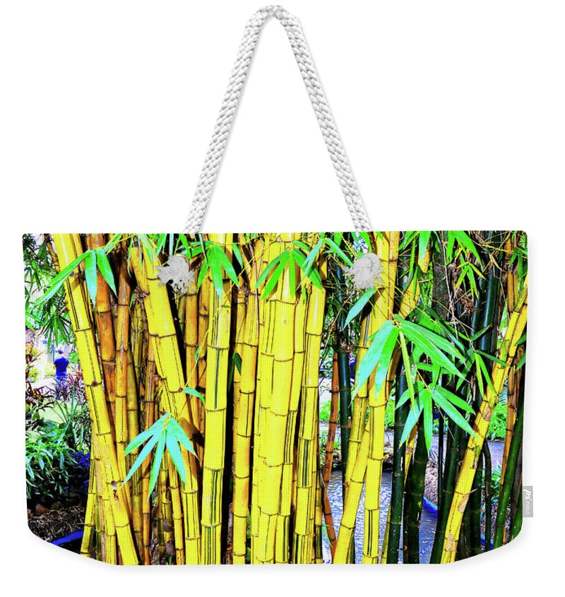 Bamboo Weekender Tote Bag featuring the photograph City Park Bamboo Grass by Wilf Doyle