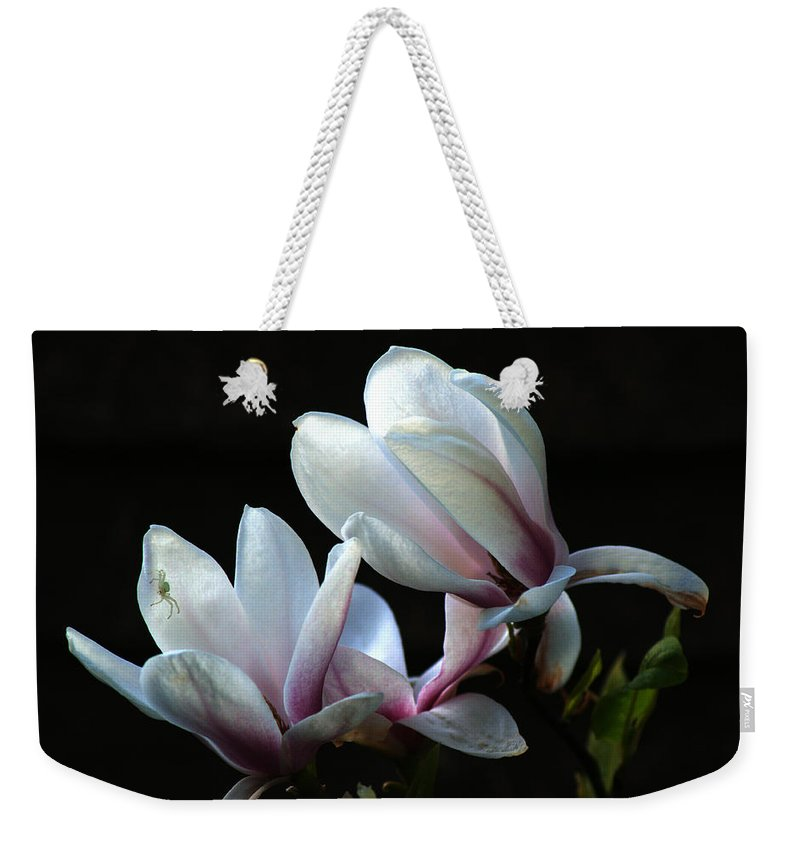 Magnolia Weekender Tote Bag featuring the photograph Magnolia And House Guest by Chris Day