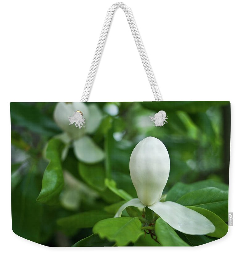 Magnolia Weekender Tote Bag featuring the photograph Magnolia Bud by Douglas Barnett
