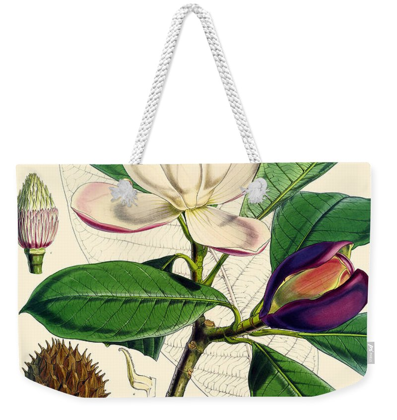 Magnolia Weekender Tote Bag featuring the painting Magnolia Hodgsonii by Joseph Dalton Hooker