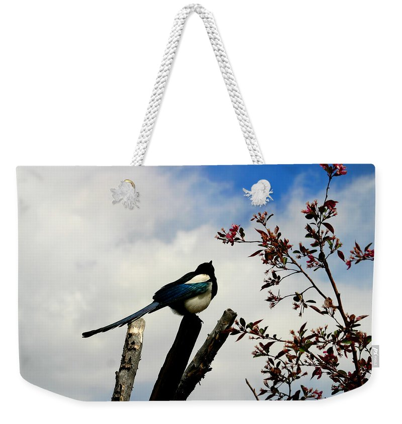 Magpie Weekender Tote Bag featuring the photograph Magpie by Anthony Jones