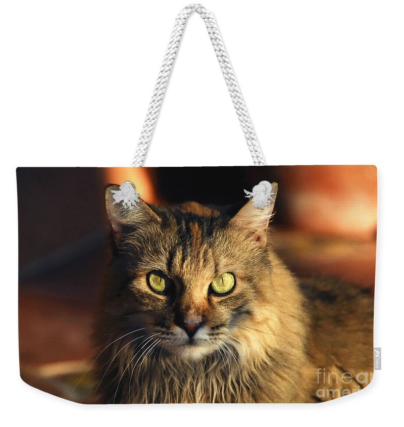 Main Coone Weekender Tote Bag featuring the photograph Main Coone by David Lee Thompson