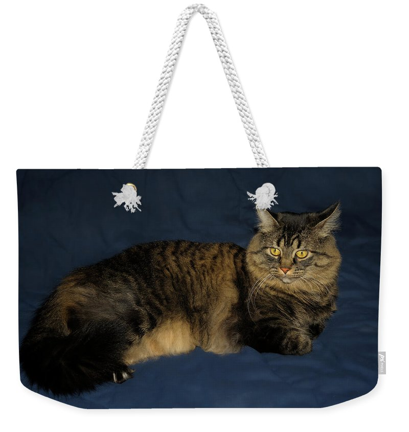 Maine Coon Weekender Tote Bag featuring the photograph Maine Coon Portrait by Frank Snyder