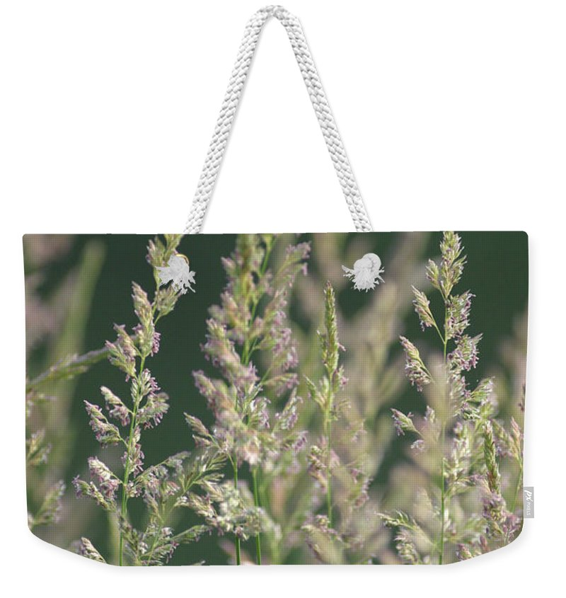 Background Weekender Tote Bag featuring the photograph Majestic Grass by Alan Look