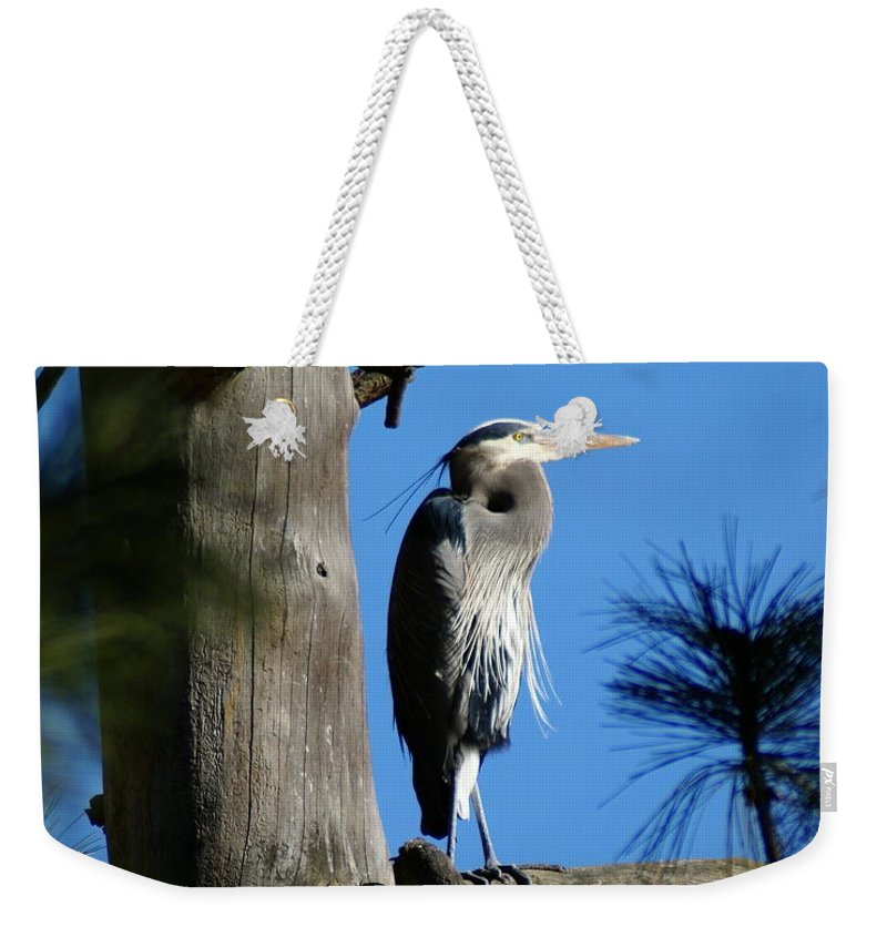 Birds Weekender Tote Bag featuring the photograph Majestic Great Blue Heron 2 by Ben Upham III