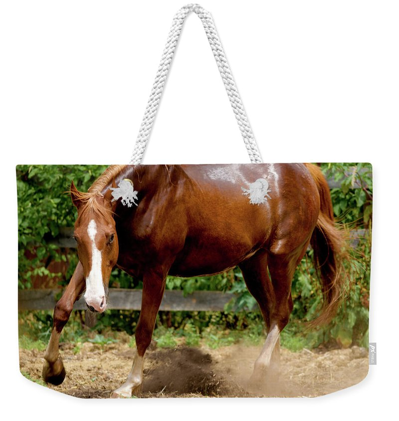 Horse Weekender Tote Bag featuring the photograph Majestic Horse by Julie Niemela