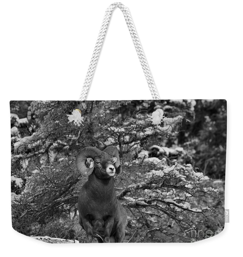 Bw Weekender Tote Bag featuring the photograph Majestic In Jasper Black And White by Adam Jewell
