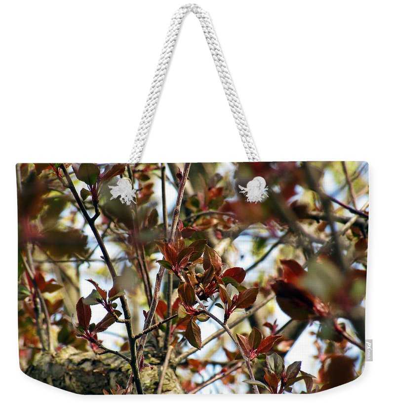Blooming Weekender Tote Bag featuring the photograph Make An Eternal Spring by Jessica Tolemy