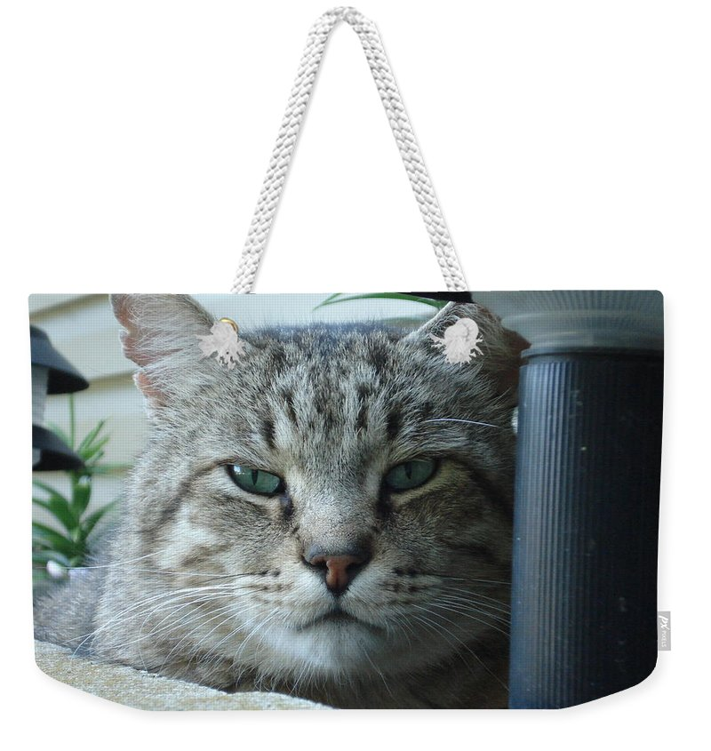 Cat Weekender Tote Bag featuring the photograph Make My Day by DB Artist