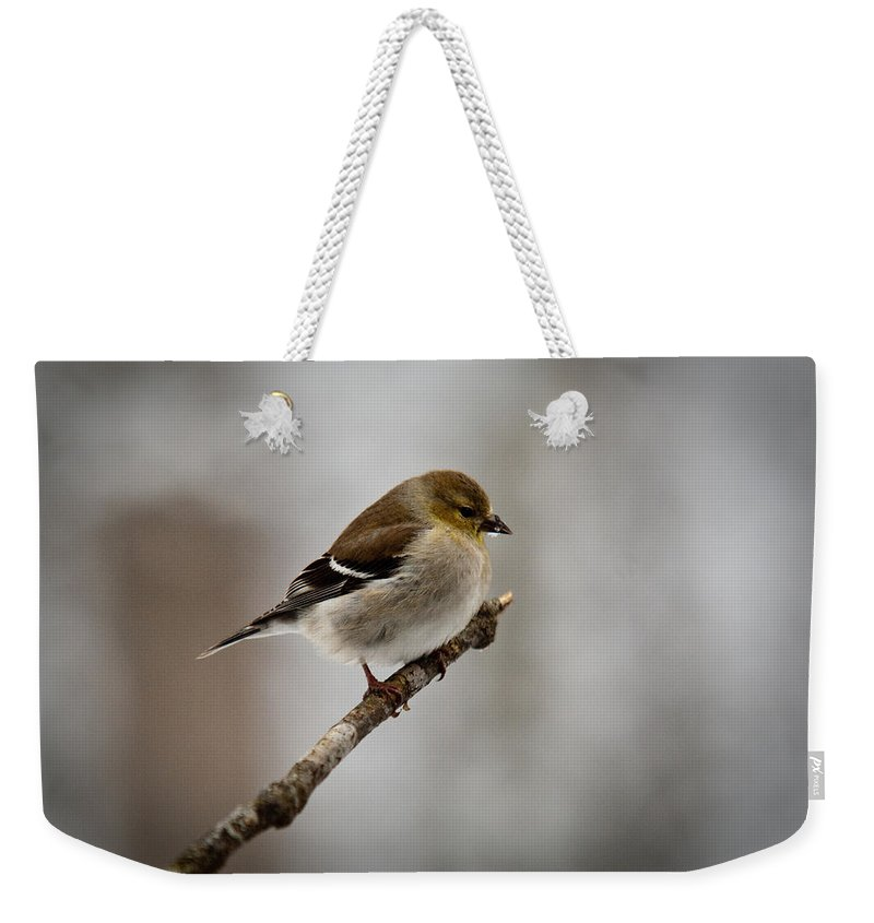 Male Weekender Tote Bag featuring the photograph Male American Golden Finch by Douglas Barnett