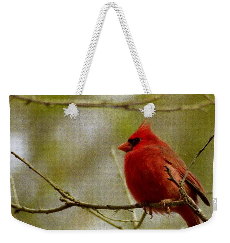 Male Weekender Tote Bag featuring the photograph Male Cardnial by Michael Peychich