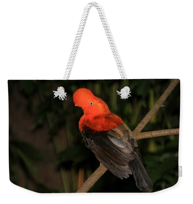 Bird Weekender Tote Bag featuring the photograph Male Cock Of The Rock by John Absher