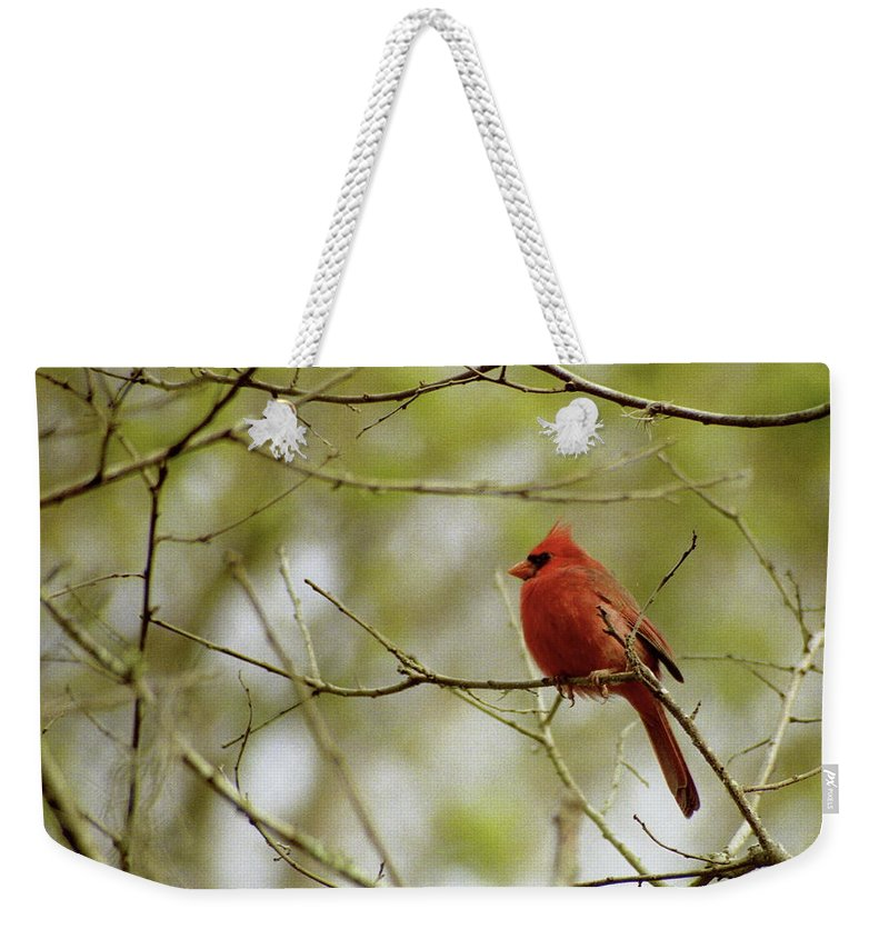 Cardinal Weekender Tote Bag featuring the photograph Male Northern Cardinal by Michael Peychich